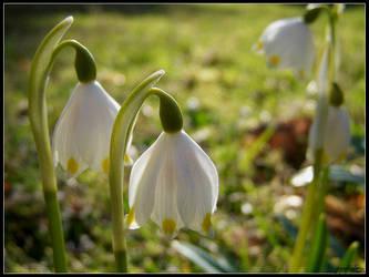 Beauty of Spring by Tindomiel-Heriroquen