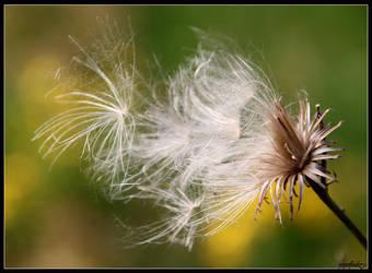 Fly... by Tindomiel-Heriroquen