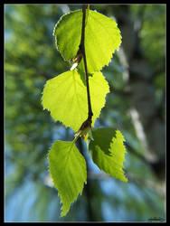 Green leaves by Tindomiel-Heriroquen