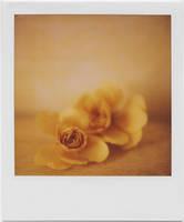 petals by equivoque