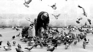 Bird Man by twenty-six-shows