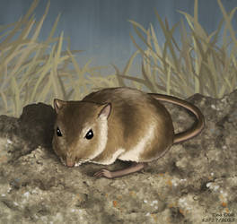 Rock Pocket Mouse by Kittensoft