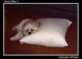 Ozzy's Pillow 3 by Kittensoft