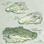 Drawing an Aligator by SuperEdco