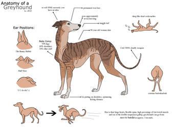 Anatomy of a Greyhound by aureath