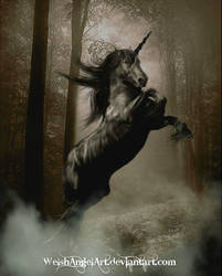 *the black unicorn* by DaisyAmethystArt