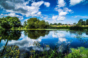 Mill Pond by EmMelody