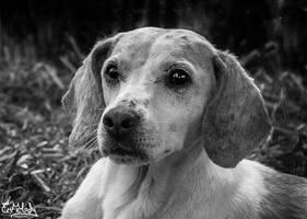 Puppy Eyes by EmMelody