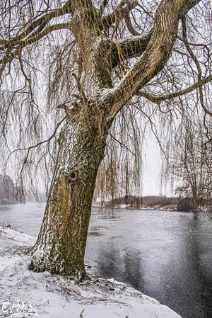 Winter's Willow by EmMelody