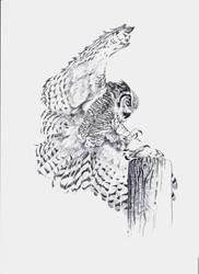 Cleared for Landing ( Horned Owl ) by jokazim