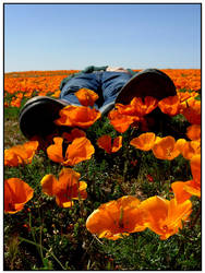 Poppies make feet smell good. by OhImSeeinStars