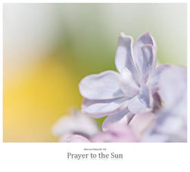 Prayer to the Sun by signmeupscotty