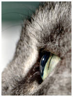 The Cat's Eye by signmeupscotty