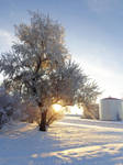Start of winter. by NinjaTanner