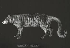 Hesperocyon gregarius by tehzebra