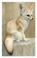 Fennec Fox Study by Deirling