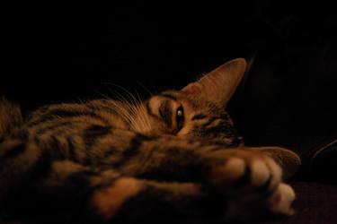 Feline by Mephisto-fugit-lumen