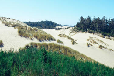 Dunes vs Forest by BuuckPhotography
