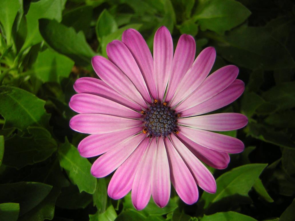 My flower by Adaae-stock