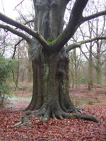 A dark tree by Adaae-stock