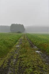Foggy pathway by Furuhashi335