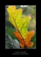 Leaf Study by saecula