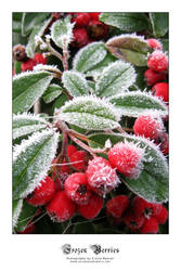 Frozen Berries by saecula