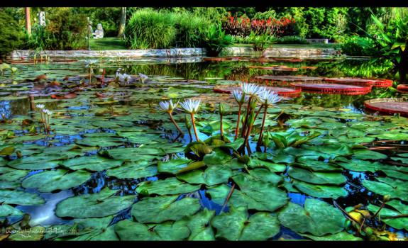 Lily Pond by ellysdoghouse