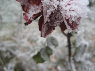 warm like snow 1 by actoraccept