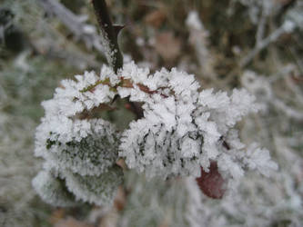 warm like snow 2 by actoraccept