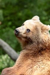 bear by janbk