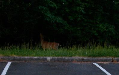 Deer by BloodyVampire83