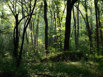 Forest by brenbren