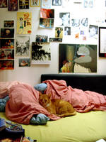 my cat in my room in my bed by Lapaka