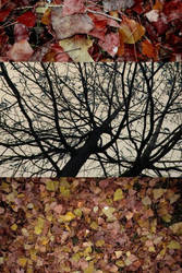 dead leaves collage by disconnectus-erectus
