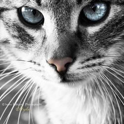 Kitty blue by ironicna