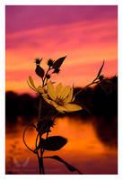Sunset 2 by ironicna