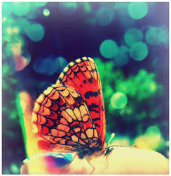 Butterfly II by ironicna