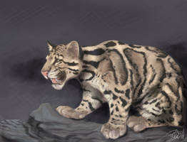clouded leopard by FelineFire
