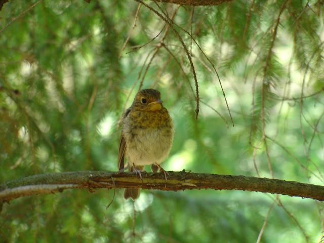 Hungary Bird by nimpo