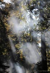 Sunlit Trees by robotdreams