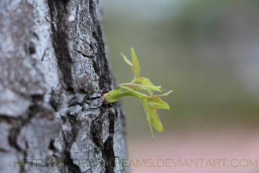 Spring Bud by robotdreams