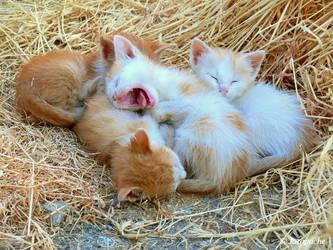 Time to sleep... by Jorapache