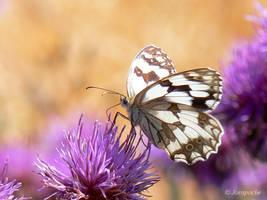 Open your wings by Jorapache