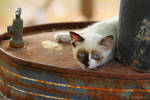 little cat on the barrel by Jorapache