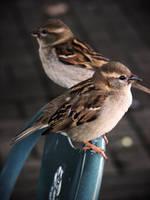 Birds by SarahJPhotography