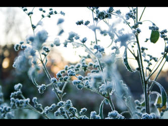 Admist The Frost by SarahJPhotography