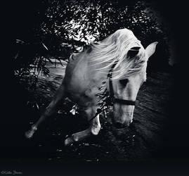 Breakaway by Equuskath
