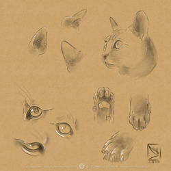 Cat Sketches by Vulpa-Art