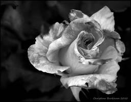 Broken Wants by LovelyBPhotography